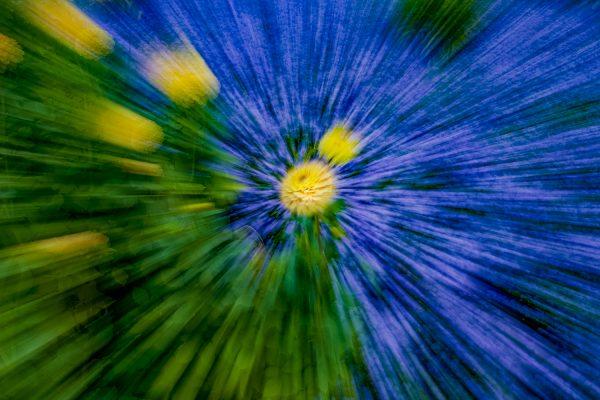 ICM- Blumenfotografie durch Bewegung