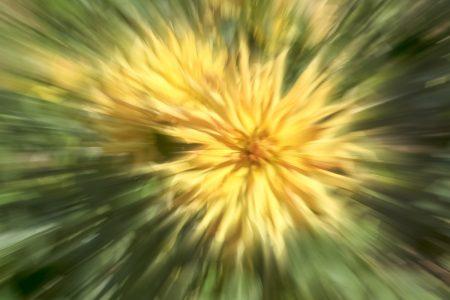 Blumenpoesie durch ICM-Kamerabewegung