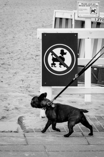 Hund will in Verbotszone