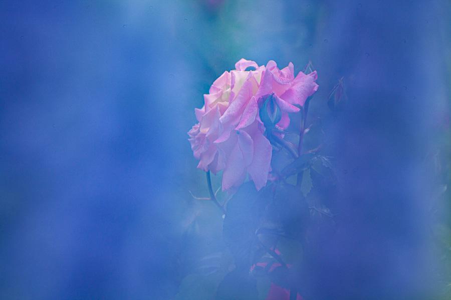 Blumen poesie